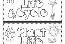 CLIL: Life cycle of a plant/tree