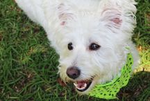 Chechi Store / Foto estudio canino
