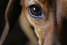 2-Жизнь собак