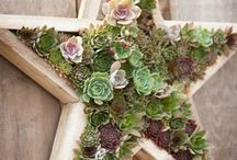 idee piante grasse / composizioni artistiche con piante grasse