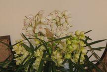 Le nostre confezioni - Enrico Orchidee Albenga / Da Enricoorchidee troverete confezioni per ogni occasione, anche personalizzate. Venite a trovarci nel nostro magazzino.