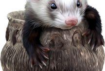 Zvířátka / Obrázky zvířat, animal pictures