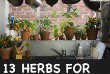 Home: Herb Garden