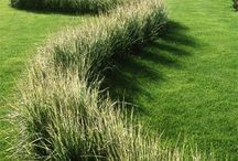 Grasses and curves
