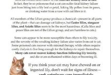 Future Pets / by Melinda Tilley
