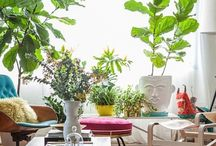 Green thumb / Houseplants, gardening / by Danielle Kenyon