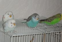 Мои птицы (My birds)