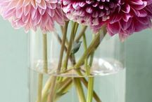 Darling Dahlias   Wedding Inspiration / This national flower of Mexico makes for a romantic, humble bloom for your big day. It is available throughout the year and comes in a variety of colors, shapes and sizes - ideal to suit your wedding theme and colour scheme. The Dahlia's symbolism of commitment is also a precious gesture to represent the newlyweds' bond as they enter their lives as one. Use it to create a big, fluffy bouquet or opt for a single stem to make a statement. Dahlias also make for great centerpieces!