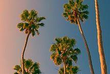that PALM TREE