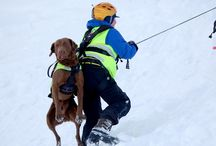 NRH - Norwegian Search and Rescue Dogs