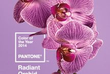 The Color of 2014: Radiant Orchid / Pink meets purple, perfectly.