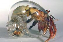 Hermit Crabbin' / by Keri Ewald