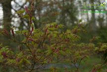 Trees / Range of trees across the season at Evenley Wood Garden
