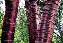 Plantas curiosas