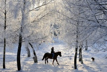 Nature::Horse