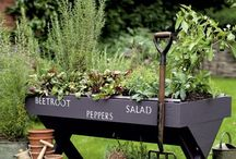 garden ideas / by Jennifer Konie