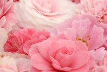 Shabby pink vintage