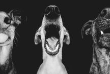 Great Dog Pictures