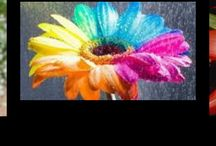Flower / Oh no it's raining food coloring