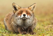 Animal Photography Inspirations / Animal Photography Inspirations