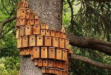Bird houses  / by Tammy Vonderschmitt