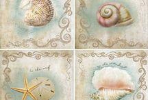 conchiglie mare e stampe marine