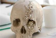 Skulls : Antlers / by Alyssa Lilley