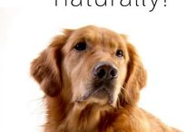 Caring For Your Pets! / What you need to know to have a great relationship with your dogs....