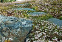 garden by anna portfolio