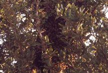 Nature - Honey Bees