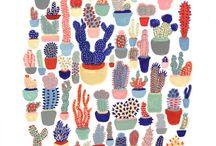 kaktusy / różne kaktusy