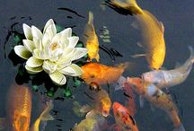 Ideas for our Koi. Pond / by Clover Johnson-Cavins