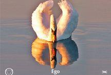 96. Ego