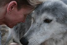 Wolfdog Rescue / Wolf Connection rescues abandoned, abused and neglected wolfdogs and provides them a lifetime of health care and social stimulation with trained handlers and the rest of their wolfdog pack.