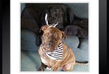 DOGS IN STRIPES / LA PAK Family strutting their Stripes....
