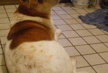 dog / my dog
