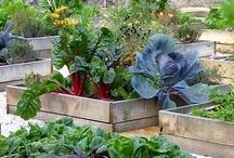jardin en carré
