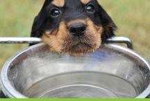 Dog Health and Wellness / Information on dog health and wellness. A healthy dog is a happy dog!