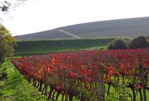 Wine Blog SA Wine