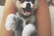 Adorable little Cuties.. ❤