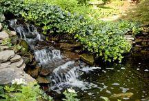 Water in the garden, ponds, pools
