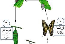 Thème papillon maternelle