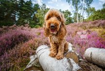 • My Photography Advice • / Follow this board for tips and advice on pet photography.