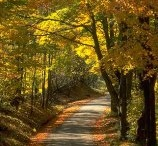 Fall in Love with Fall / My favorite season is Autumn.