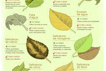 plantas  e dicas