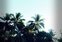 My Home / Celebes to Borneo