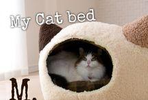 猫の居る日常