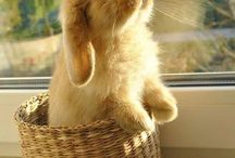 I love bunnies! / for all the little cute bunnies out there!
