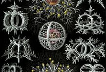 heart neuron
