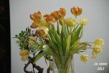 Paysages - Fleurs - Ambiances
